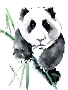 Buy Panda Bear, Watercolor by Suren Nersisyan on Artfinder. Discover thousands of other original paintings, prints, sculptures and photography from independent artists. Bear Watercolor, Watercolor Animals, Watercolor Paper, Bird Artwork, Paper Tags, Panda Bear, Lovers Art, Pet Birds, Buy Art
