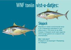 Skipjack tonijn