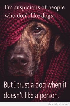 Boy, is this ever the truth, my dog was right on. Sure would like to know, how they know. :}
