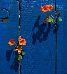 ** Orange & blue