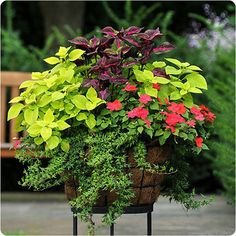 99 Simple Summer Container Garden Flowers And Formula (48)
