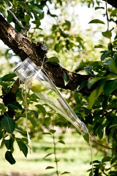 Clear Creek Distillery of Portland, OR grows pears & apples inside bottles for their fruity liqueurs. Garden Plants, Fruit Garden, Edible Garden, Garden Spaces, Pear Liqueur, Pear Brandy, Garden Pictures, Outdoor Living, Outdoor Decor