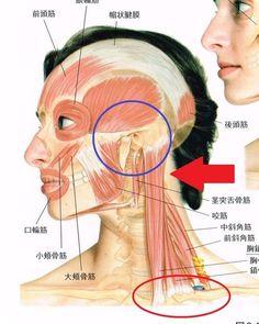 耳から全身はつながってる~ | 子どももママもぐっすり眠れるようになるアトピー・湿疹・乾燥肌改善・免疫アップケア【浜松・湖西・豊橋】