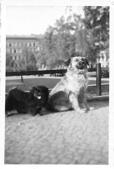 Photograph Snapshot Vintage Black and White: 2 Dogs Road Tongue Black 1950's