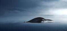 whale by nikos Bantouvakis  - Photo 137179867 - 500px