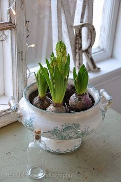 Old tureens to hold bulbs and flowers on windowsills Indoor Garden, Outdoor Gardens, Fleurs Diy, Spring Bulbs, Deco Floral, Diy Décoration, Window Sill, Spring Flowers, Houseplants