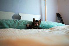 Este gatito que, de plano, no quiso salir de las cobijas en todo el fin de semana. | 19 Animales que decidieron no regresar de vacaciones.