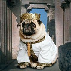 Caesar pug!