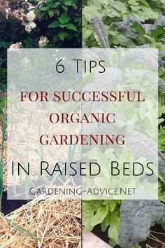 Follow these 6 essential tips for raised bed organic gardening and you will grow healthy and nutrient dense vegetables in no time!  This is the way we grow all our vegetables in our raised beds that we also sell to the public.