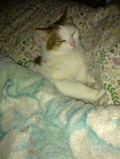 Натюрморт и тёплая кровать =)