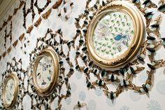 Beautiful insect pattern.   jennifer angus | Tumblr