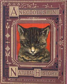 Image of cat head on book cover.
