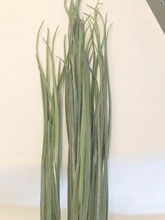Xtra tall grass