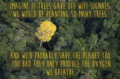 Imagine if trees gave off WIFI signals.....