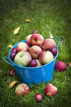 Taste of the Season: Amazing Apple Recipes! 9 of the very best apple recipes you must try this fall. These are perfect for using all those apple you picked at the apple orchard! Best Apple Recipes, Apple Crisp Recipes, Fall Recipes, Fruit Recipes, Apple Dumpling Recipe, Apple Dumplings, Apple Art, Apple Harvest, Fruit