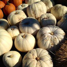 Pumpkin VarietiesAppleWasabi Cooking Blog