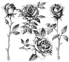 dessin fleurs noir et blanc: Tiré par la main de fleurs ensemble, collection rose Illustration
