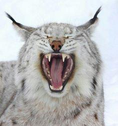 1000 Images About Kentucky Wildcats On Pinterest  Bird