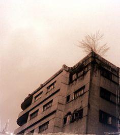 Arbol en un edificio - Plaza Venezuela