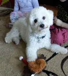 Jay Jay 3119 Age: approx. 8-9 months Sex/Altered: Male/ Neutered Weight: 12 lbs Breed: Bichon Mix Foster Home Location: OSHAWA, ON Adoption Fee: $500.00 Temperament: Calm, happy, mature puppy mode, loves to play Activity/Energy Level: Moderate Origin: Owner surrender
