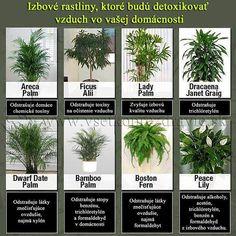 Pokojové rostliny které detoxikují vzduch ve vaši domácnosti.