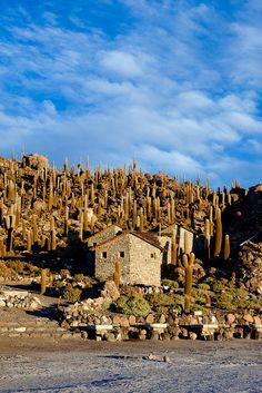 Isla Incahuasi, Salar de Uyuni, Bolivia. Isla Incahuasi is a hilly and rocky outcrop of land in the middle of Salar de Uyuni, the world's largest salt flat, at an elevation of 11,995 ft. It is located in the Potosí Department in Bolivia. It is the top of the remains of an ancient volcano, which was submerged when the area was part of a giant prehistoric lake, roughly 40,000 years ago. Photo by kk+, via Flickr