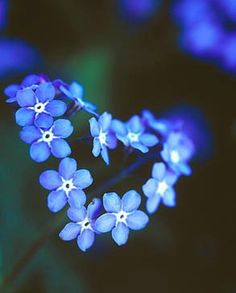 blue heart flowers forget me nots My Flower, Flower Power, Love Blue, Blue And White, Heart In Nature, World Of Color, Something Blue, Shades Of Blue, Rainbow Colors