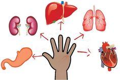 súlycsökkentő gyógyszerek fibromyalgia esetén)