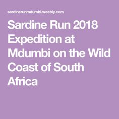Sardine Run 2018 Expedition at Mdumbi on the Wild Coast of South Africa South Africa, Coast, Running, Keep Running, Why I Run, Lob