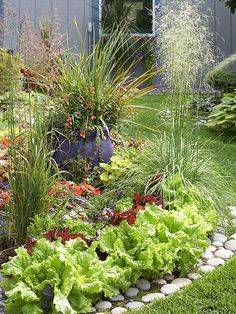 Mix in Edibles:   Take advantage of the beauty of edible plants and incorporate them in the landscape. Here, bright green and red lettuces form an intriguing border planting and eliminate the need for a separate vegetable garden.