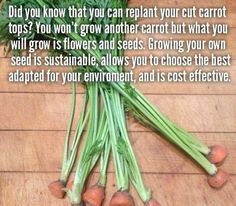 garden tips garden tip- why when you replant carrot tops carrots never grew, not supposed to, but you get carrot seeds which you can then plant to restart cycle Growing Carrots, Growing Vegetables, Growing Plants, Growing Seedlings, Growing Sweet Potatoes, Growing Seeds, Growing Tomatoes, Root Vegetables, Permaculture