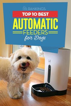 24 Best Automatic Dog Feeders images  4d22d7e36