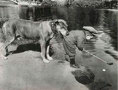 ¡¡¡¡¡LOS ANIMALES EN MUCHAS OCASIONES TAMBIEN SON ÁNGELES SALVADORES!!!!!