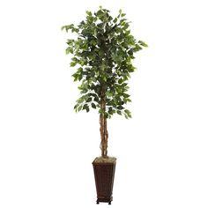 6.5' Ficus w-Decorative Planter