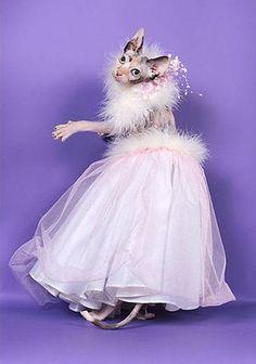 Cat in elegant wear