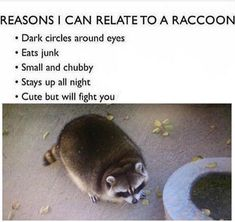 "23 Raccoon Memes For Anyone Who Just Loves Those Little Trash Pandas - Funny memes that ""GET IT"" and want you to too. Get the latest funniest memes and keep up what is going on in the meme-o-sphere. Funny Shit, Funny Cute, Funny Stuff, Funny Things, Random Things, Stuff Stuff, Happy Things, Girly Things, Random Stuff"