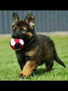 From reddit: police K9 puppy first day on the job | Animal ...