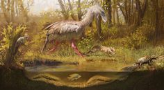 Digital art. Eocene ecosystem. Tortoise, amphisbaenia, caviomorph, cichlid, fororraco, hoatzin, polypterus and protopterus Take a look at my new web site:emiliorolandi.com/