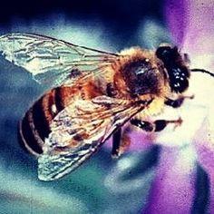 Včelí jed zmierňuje zápaly kĺbov.#artritis #zdravie #vcelijed #apiterapia #vcela