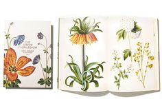 The 17th century blooms anew in a rediscovered bible of botanical illustration