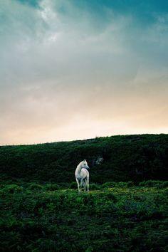 www.pegasebuzz.com | Equestrian photography : Matthew Coleman