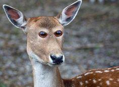 Cómo se verían estos 8 animales si tuvieran los ojos en la parte frontal. Atención al #4 #viral