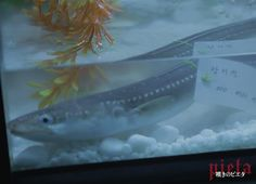 映画『嘆きのピエタ』:image009 Aquarium, Fish, Pets, Photography, Animals, Goldfish Bowl, Photograph, Animales, Animaux