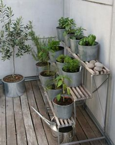 Balcony Vegetable Garden - might have to do it this way for a while