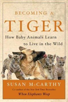 Not to be confused with the book about tiger mothers