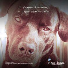 A nossa homenagem ao amor canino ;)