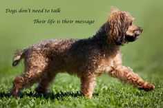Dogs don't need to talk. Their life is their message.