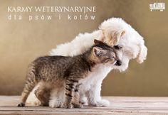 Nowe #karmy weterynaryjne dla psów i kotów