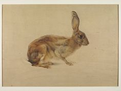 Study of a hare | Edward Julius Detmold