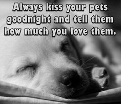 Love Pet, I Love Dogs, Puppy Love, Dog Quotes, Animal Quotes, Animals And Pets, Cute Animals, Crazy Dog Lady, Stop Animal Cruelty